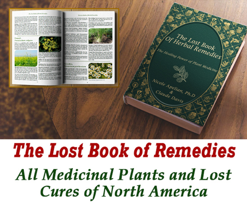 The Lost Book of Cures